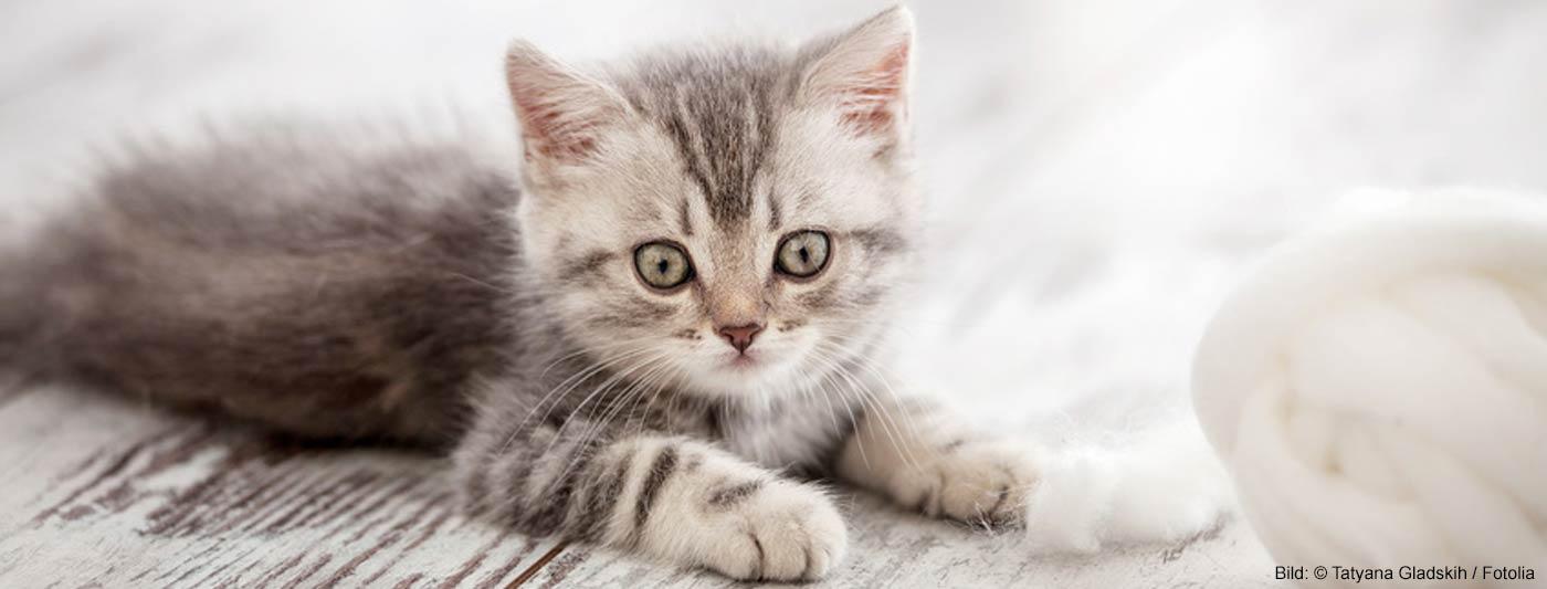 Katzennamen nach Charakter der Katze
