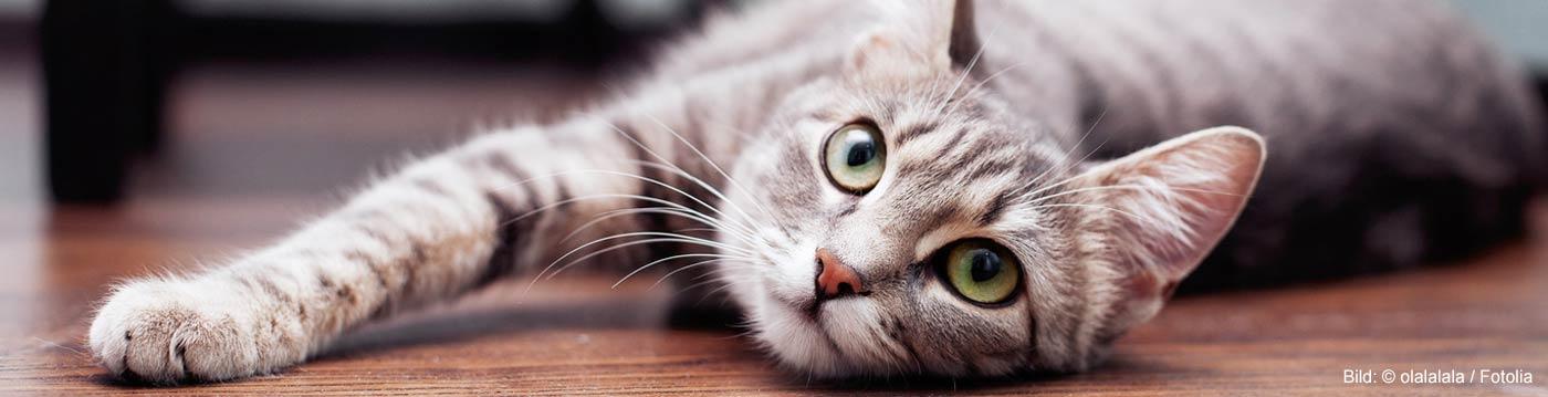 Katzennamen: Welcher Name für Katzen?